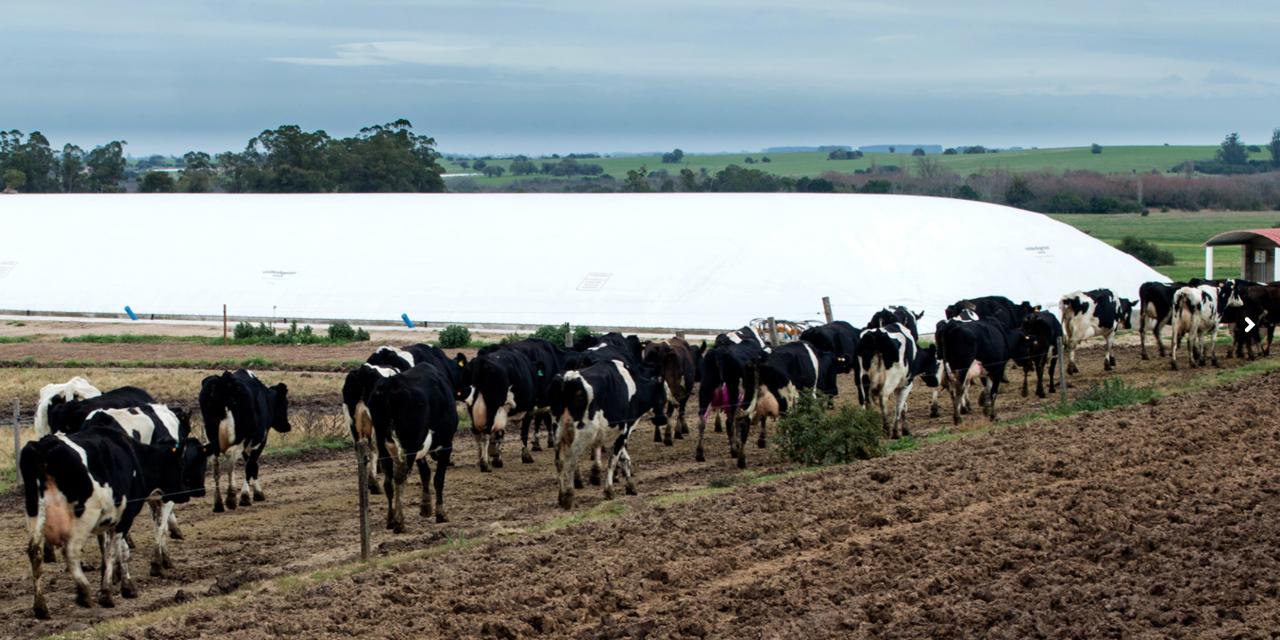 El plan de gestión de residuos que impulsa Uruguay para transicionar hacia un modelo de economía circular y reducir emisiones