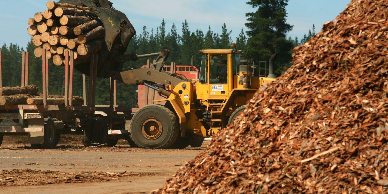 Opinión: La Provincia de Corrientes impulsa su industria forestal y la biomasa