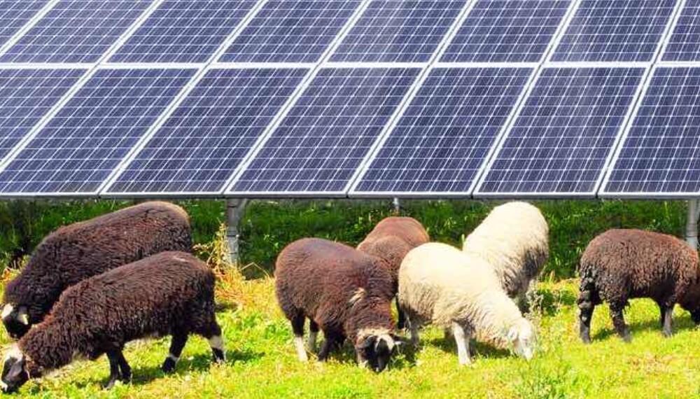 Agro-Voltaica: el concepto que proponen empresarios colombianos para generar mayor empleo y productividad en las renovables