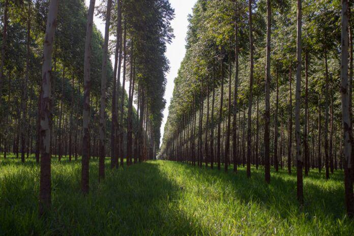 Una nueva medida de Gobierno fomenta la biomasa en Paraguay